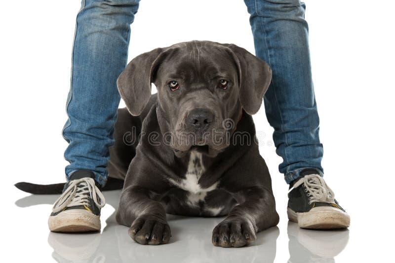 Download Hond tussen benen stock foto. Afbeelding bestaande uit looking - 54089756