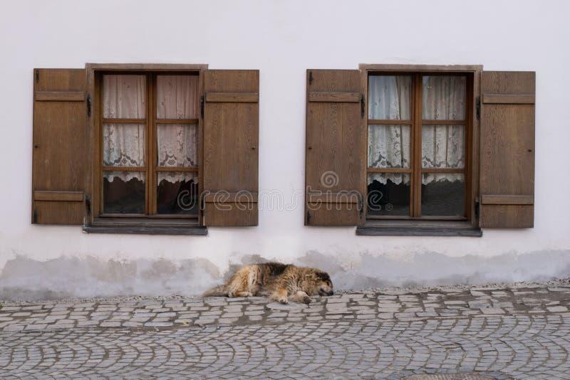 Hond tussen twee vensters royalty-vrije stock afbeeldingen