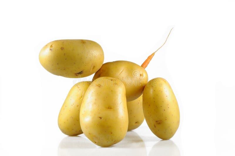 Hond van gewassen aardappel royalty-vrije stock afbeeldingen