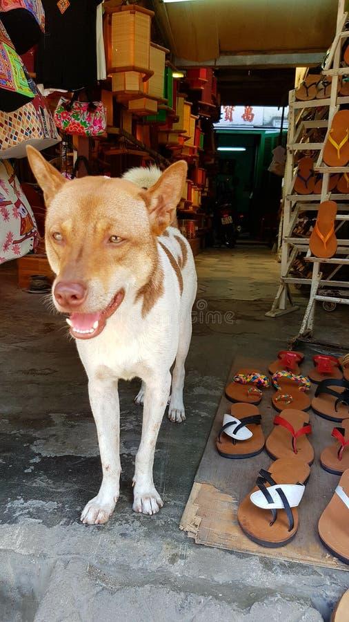 Hond voor Vietnamese opslag royalty-vrije stock foto's