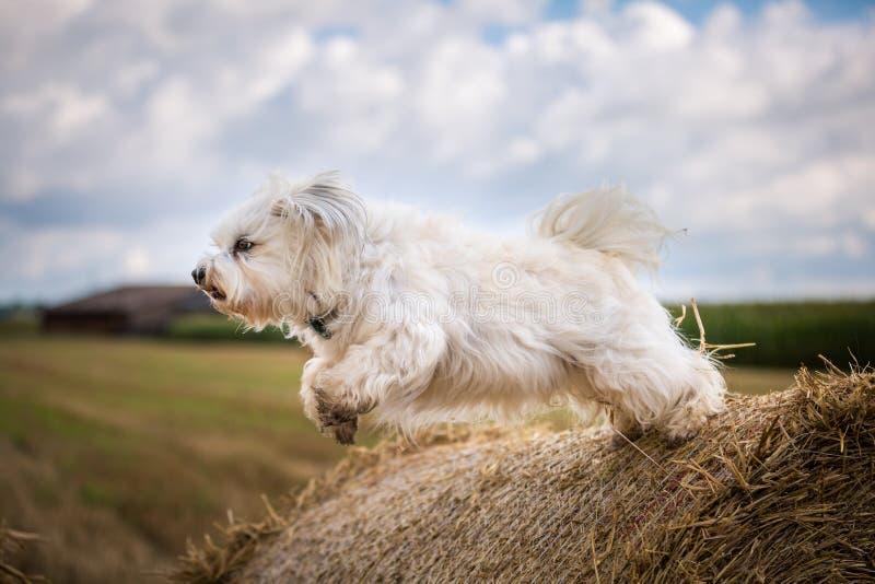 Hond wanneer het springen stock foto