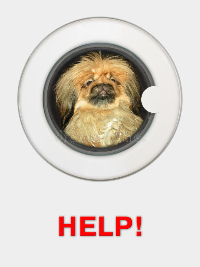 Hond in wasmachine stock afbeelding