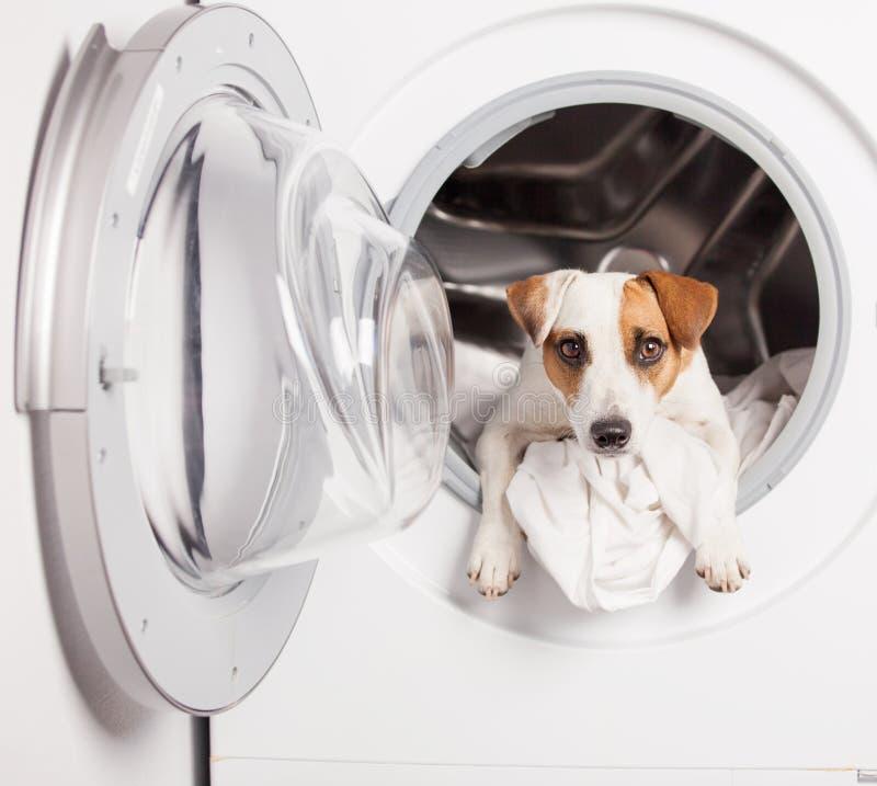 Hond in wasmachine royalty-vrije stock foto's