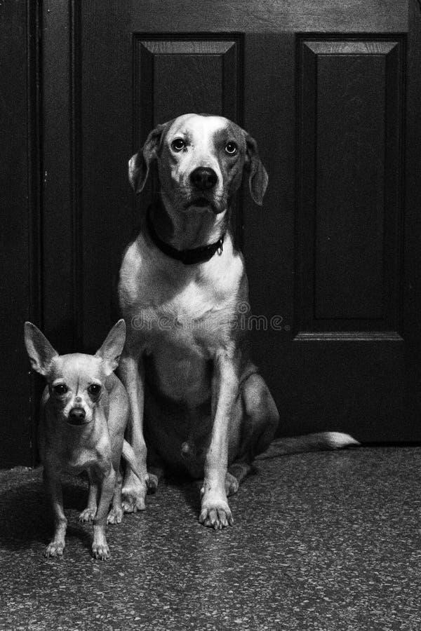 Hondbroers royalty-vrije stock afbeelding