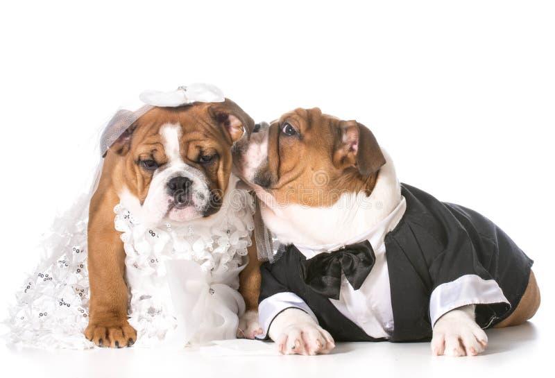 Hondbruid en bruidegom stock foto's