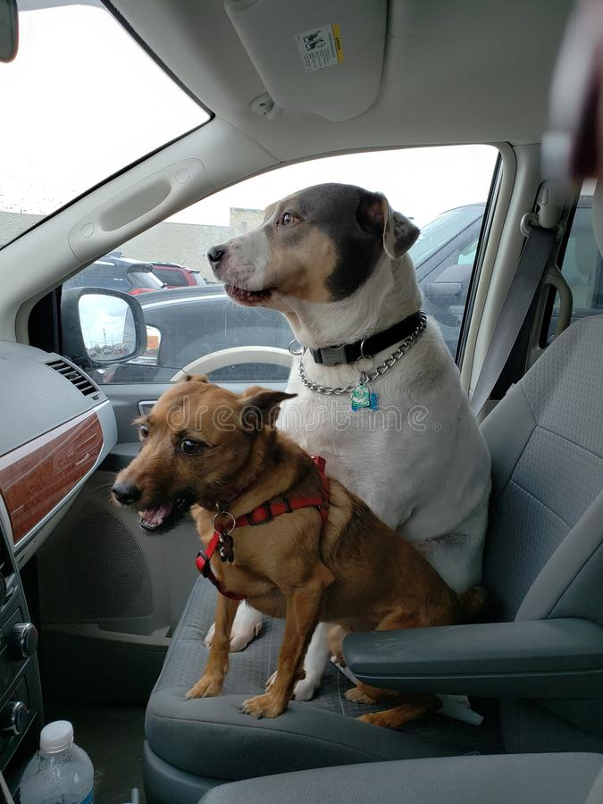 Honden royalty-vrije stock foto's