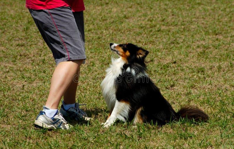 Honden 21 royalty-vrije stock foto