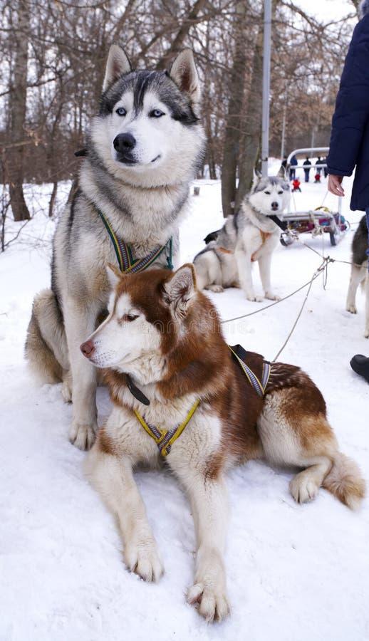 Honden royalty-vrije stock fotografie