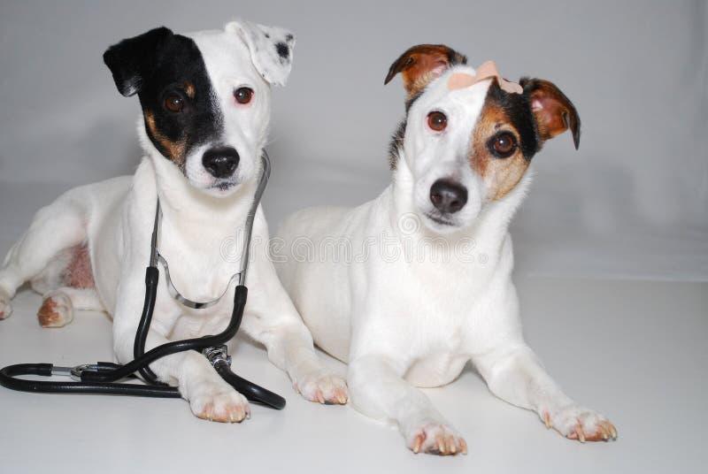 Honden als arts en patiënt stock fotografie