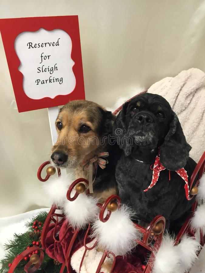 Honden bij Kerstmis stock afbeeldingen