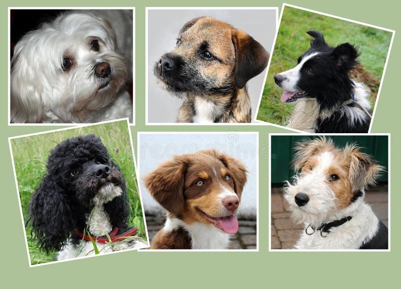 Honden, collage stock afbeeldingen