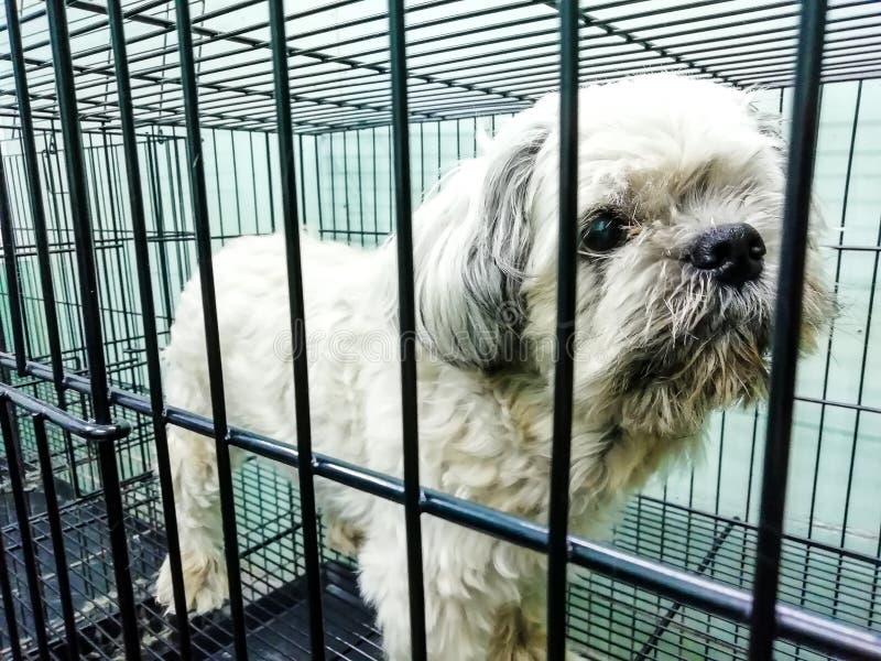 Honden in de kooi die op het haar in dierlijke ca voorbereidingen treffen te wachten stock foto's