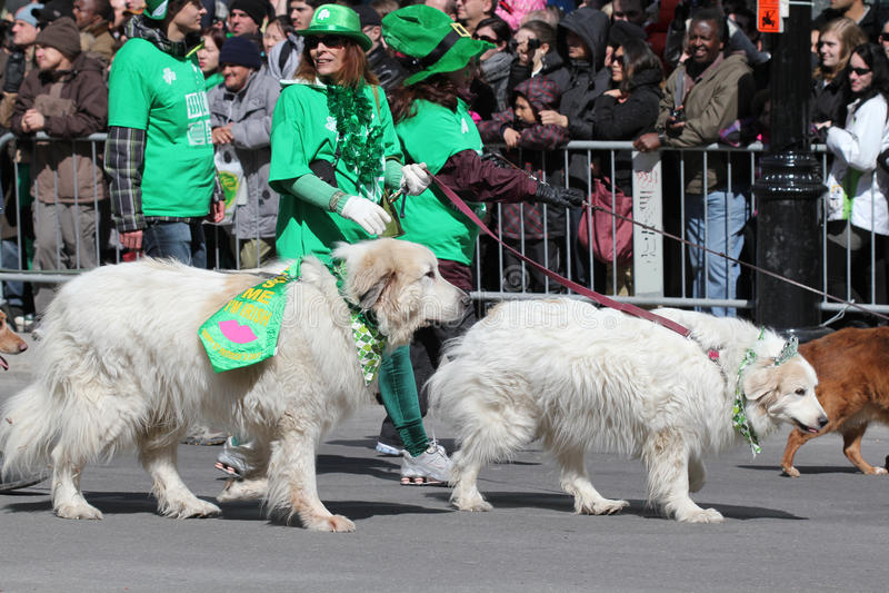 Honden in de parade stock fotografie