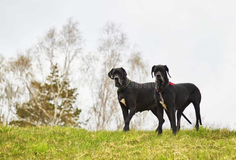 Honden die camera bekijken royalty-vrije stock afbeeldingen