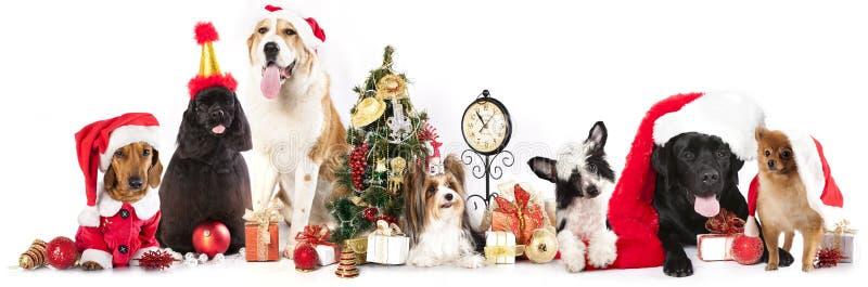 Honden die een Kerstmanhoed dragen royalty-vrije stock afbeelding