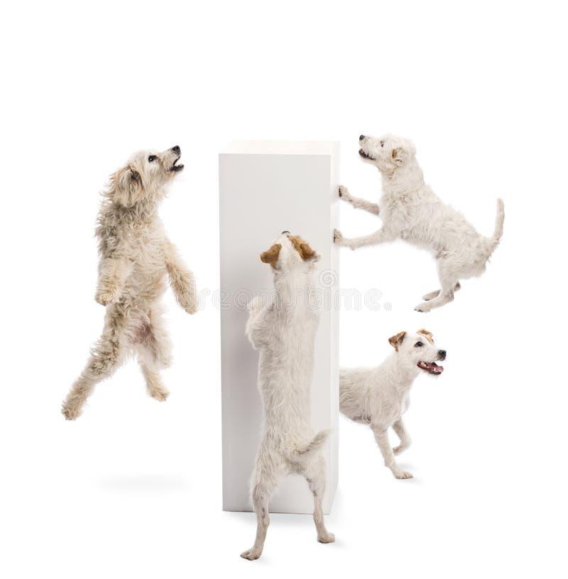 Honden die en voetstuk springen bekijken royalty-vrije stock afbeeldingen