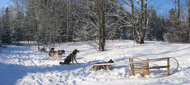 Honden die wat rust - Dogsledding hebben - Quebec - Panorama royalty-vrije stock foto's