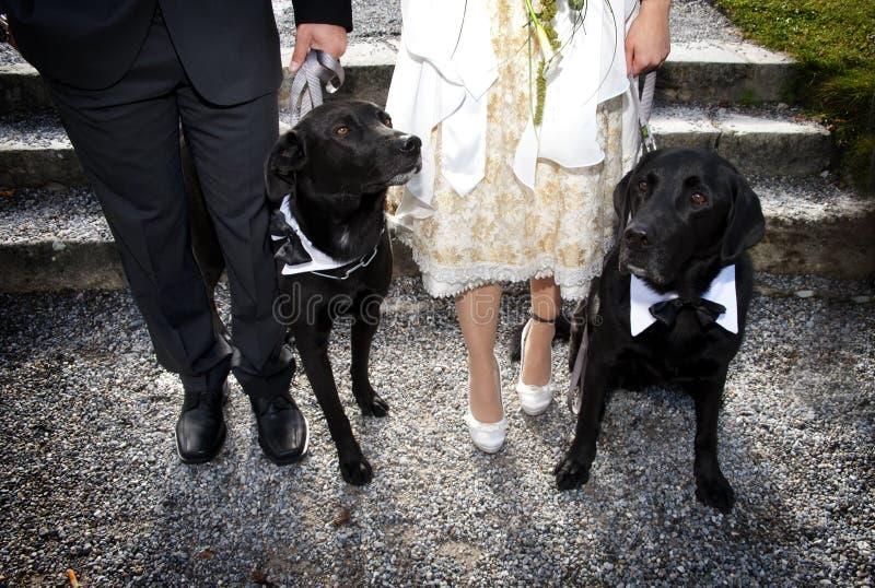 Honden en eigenaars stock fotografie