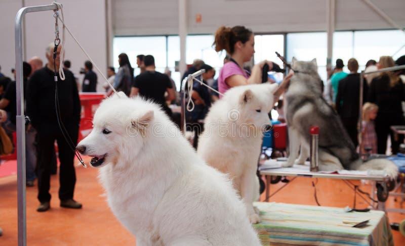 Honden en hun eigenaars bij tentoonstelling royalty-vrije stock fotografie