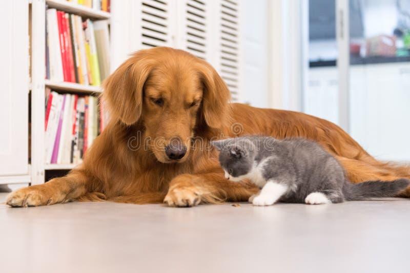 Honden en katten royalty-vrije stock foto's