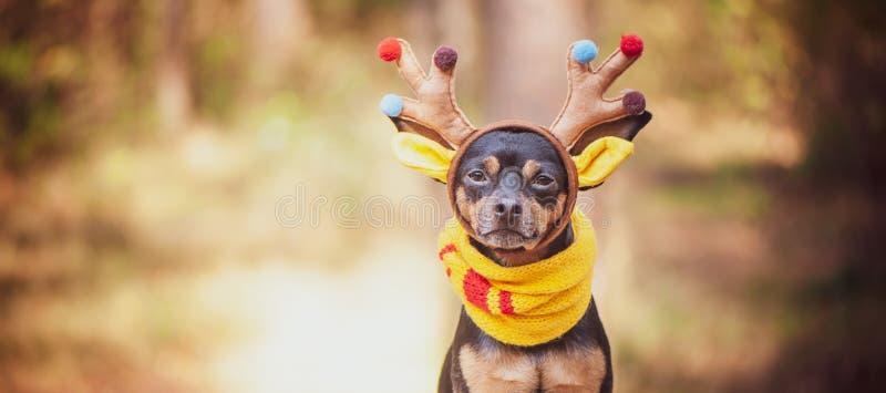 Honden in hertenkostuum, de Herfststemming, fantastische hertenhond stock afbeelding
