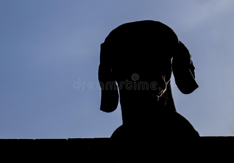 Honden hoofdsilhouet met blauwe hemel mooie achtergrond stock foto's