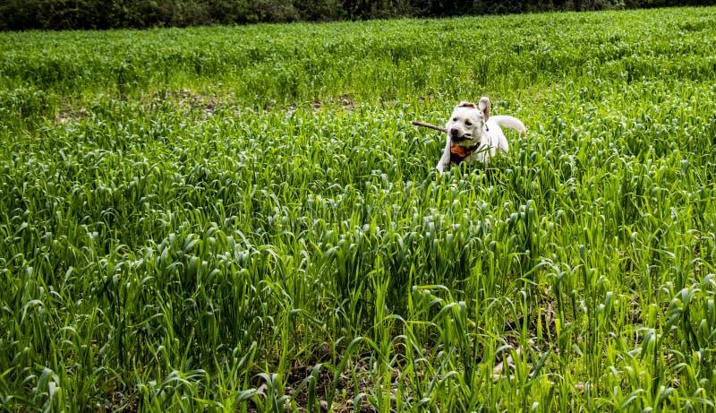 Honden lopen vrij in aard royalty-vrije stock afbeeldingen