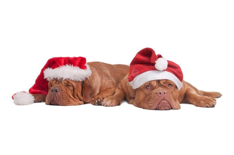 Honden met de hoeden van Kerstmis stock afbeelding