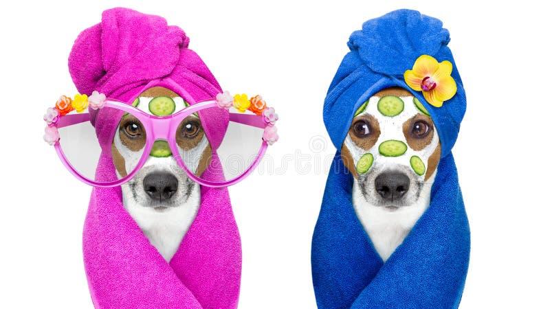 Honden met een schoonheid mask wellness spa stock afbeeldingen