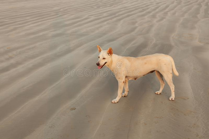 Honden op het strand stock fotografie