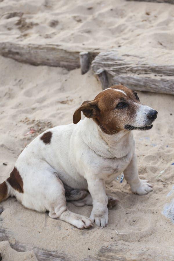 Honden op het strand royalty-vrije stock fotografie