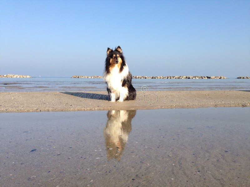 Honden op Water bij het Strand stock foto's