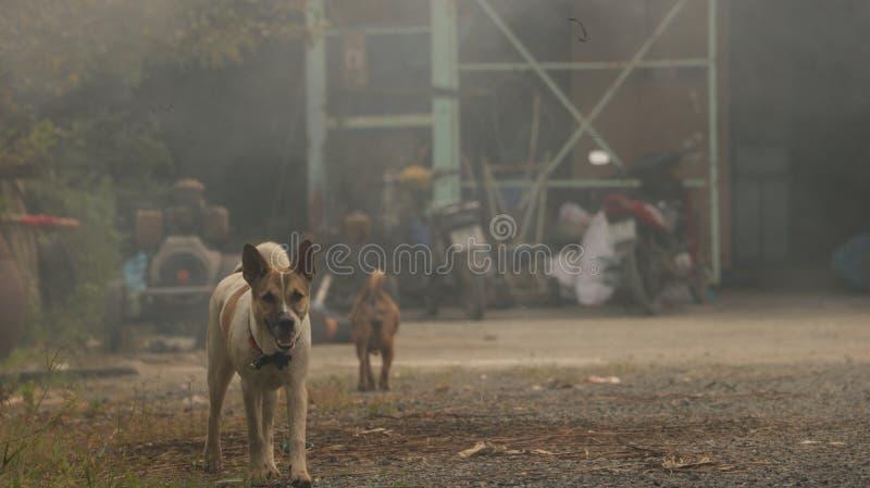 Honden in Rokerige Uitstekende Werf royalty-vrije stock foto's