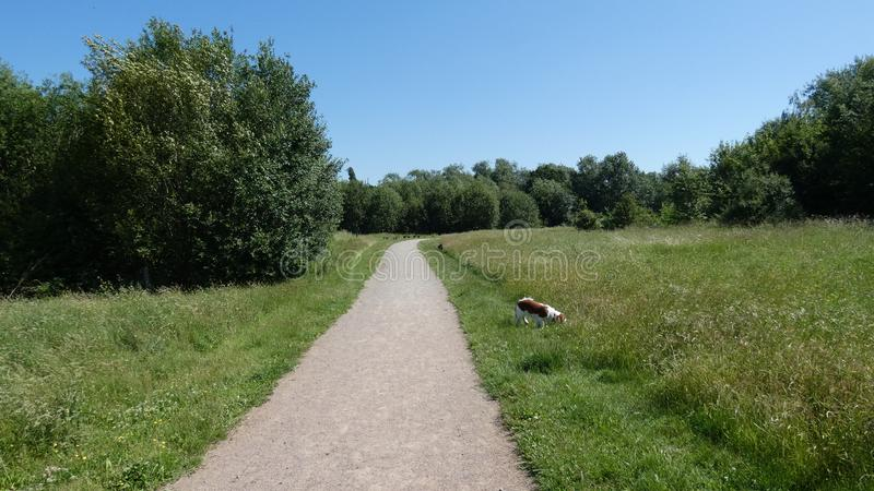 Honden uit op een de zomerdag in Engeland stock foto