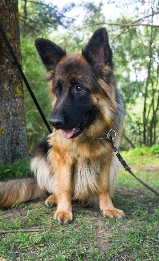 Honden van diverse rassen stock afbeelding