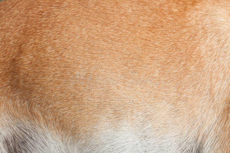Hondenbont stock foto's