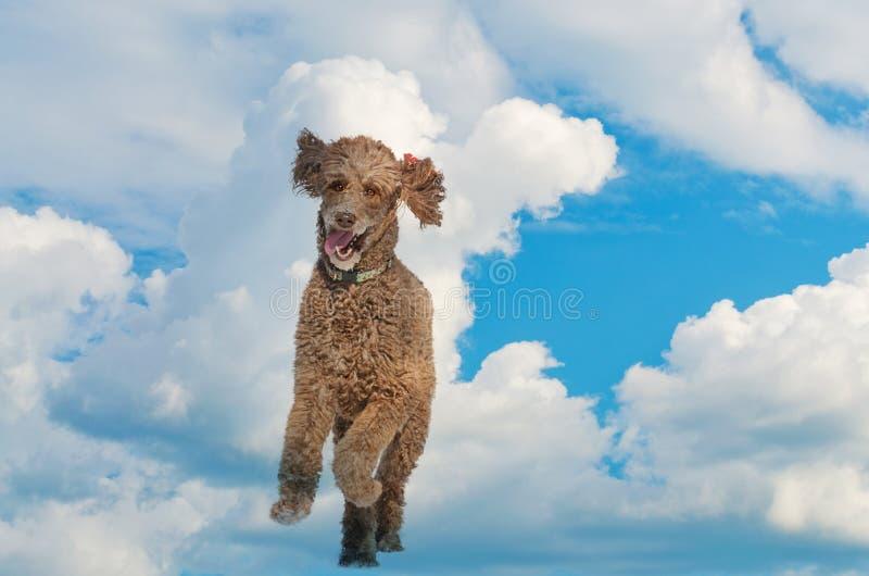 Hondenmening die van hemelse pret in de hemel lopen royalty-vrije stock afbeeldingen