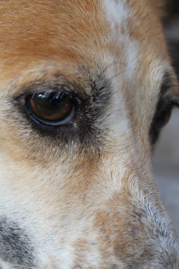 Hondenogen stock foto's