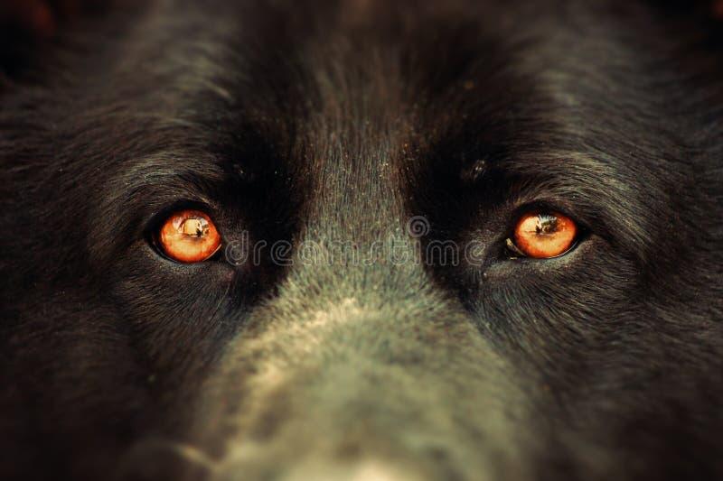 Hondenogen royalty-vrije stock afbeelding