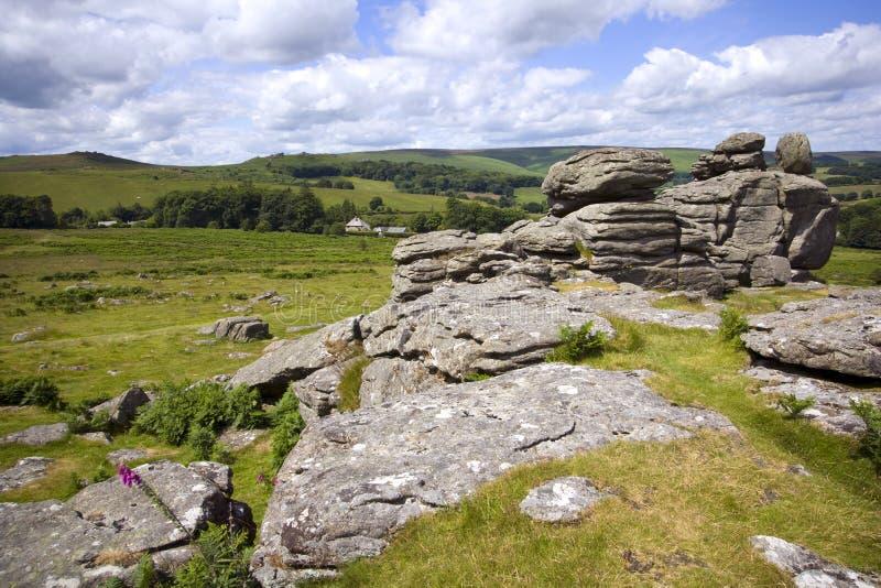 Hondenpiek, Dartmoor, Devon royalty-vrije stock afbeeldingen