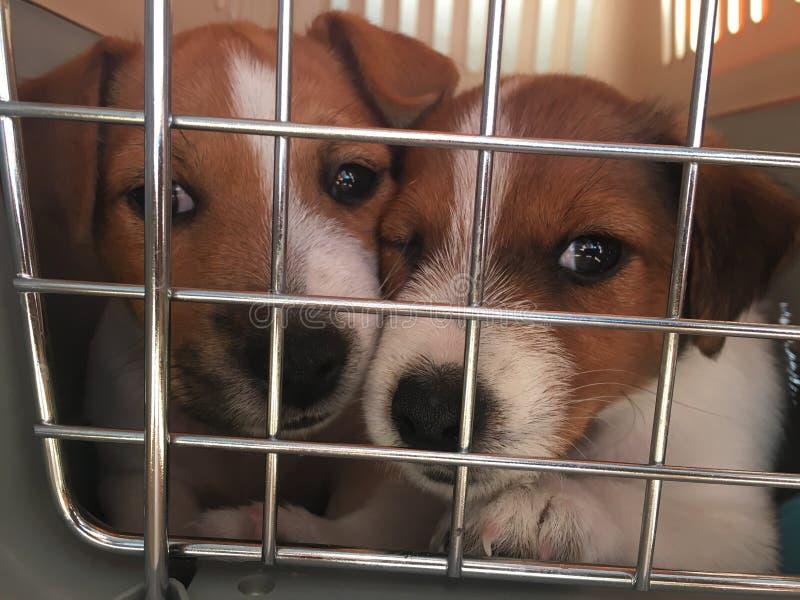 Hondenpuppy in een kooi royalty-vrije stock afbeeldingen