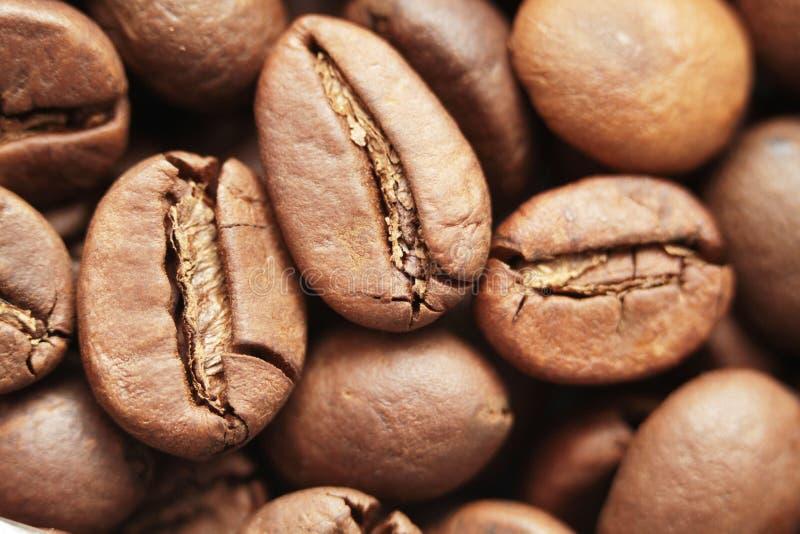 Honderd die dollarrekening van koffiebonen wordt gemaakt over witte achtergrond stock fotografie