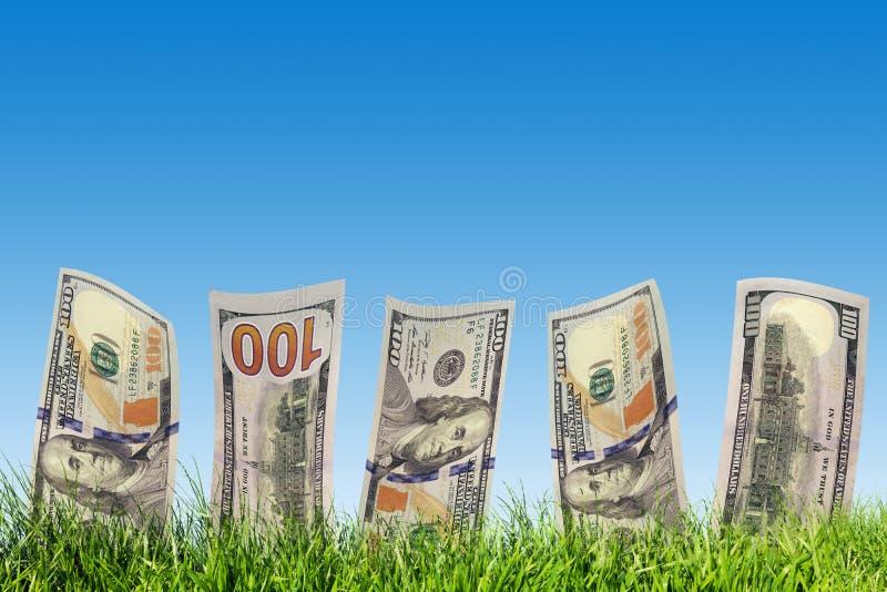 Honderd dollarsbankbiljetten die van groen gras groeien Geld royalty-vrije stock afbeelding