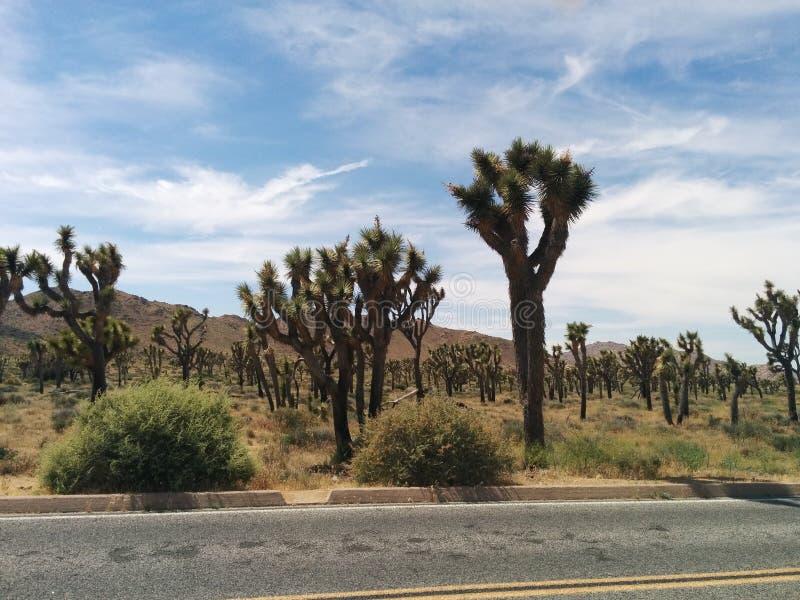Honderden Joshua-bomen in woestijnlandschap naast weg royalty-vrije stock foto's