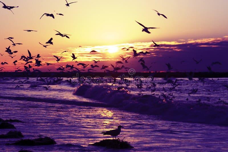 Honderden zeemeeuwen bij de kust in Holland stock afbeelding
