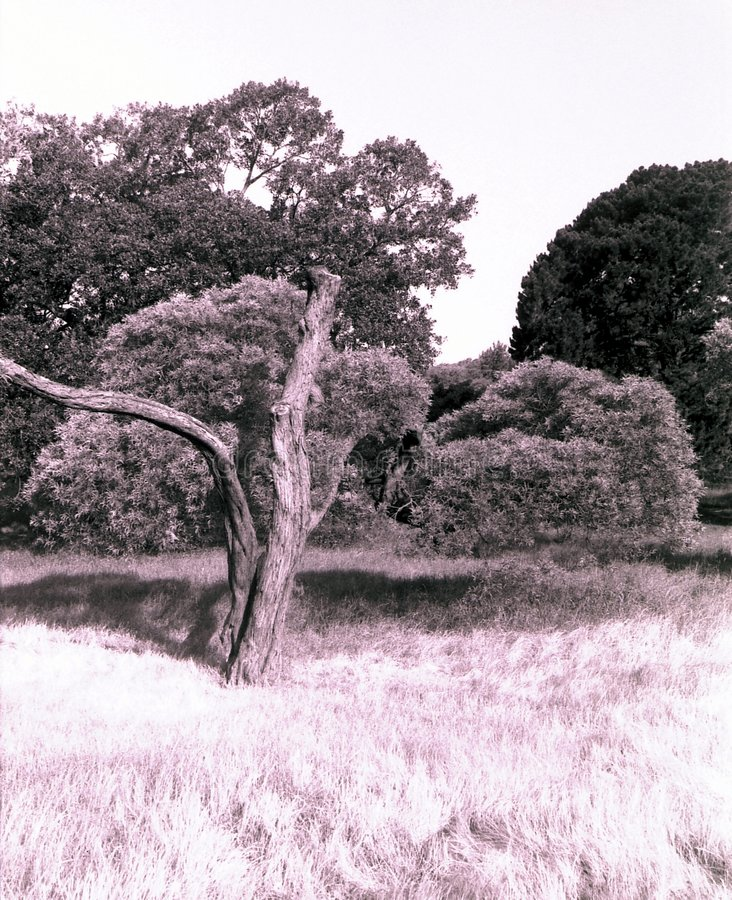 Download Honderdjarig Park, Sydney stock foto. Afbeelding bestaande uit bomen - 27602