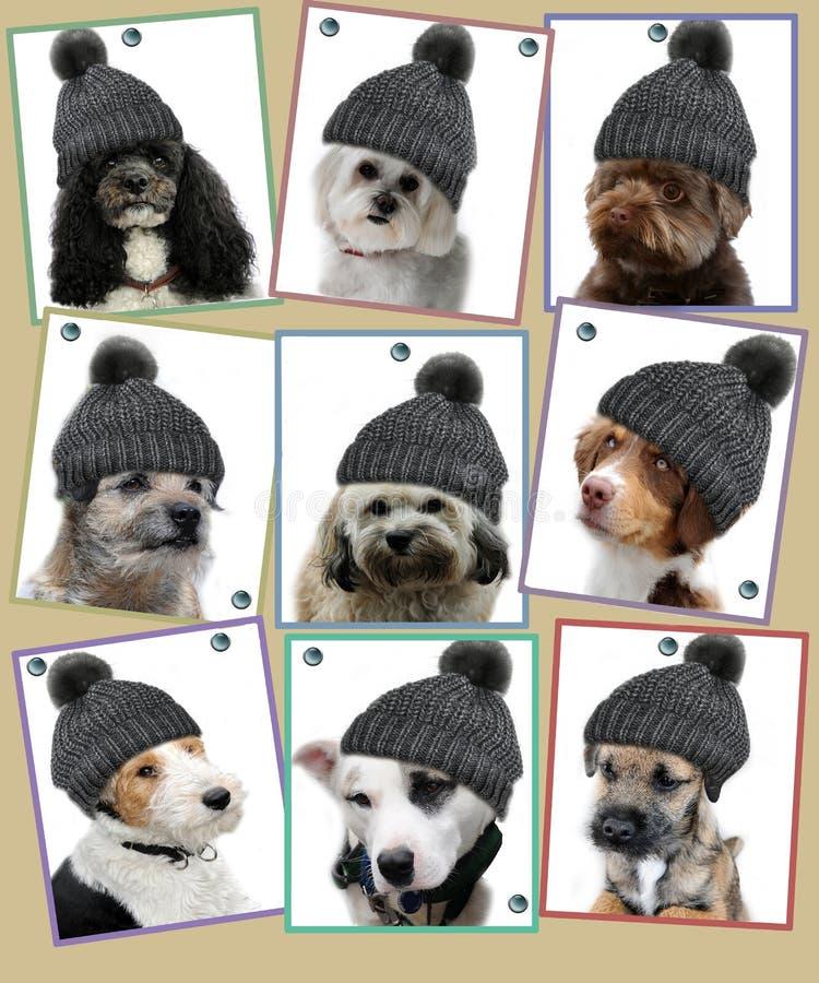 Hondfoto's op speldraad stock afbeelding