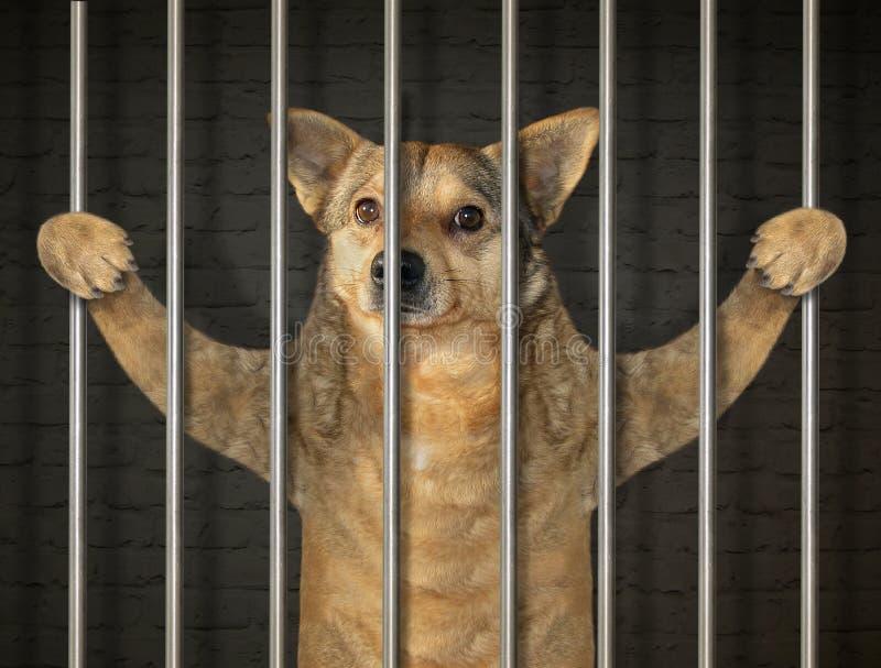 Hondgevangene in gevangenis 2 stock afbeelding