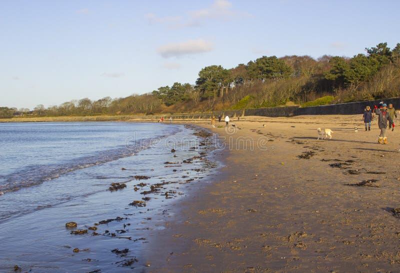 Hondminnaars en hun huisdieren die het strand lopen in Ballyholme een voorstad van de Provincie van Bangor neer in Noord-Ierland royalty-vrije stock foto's