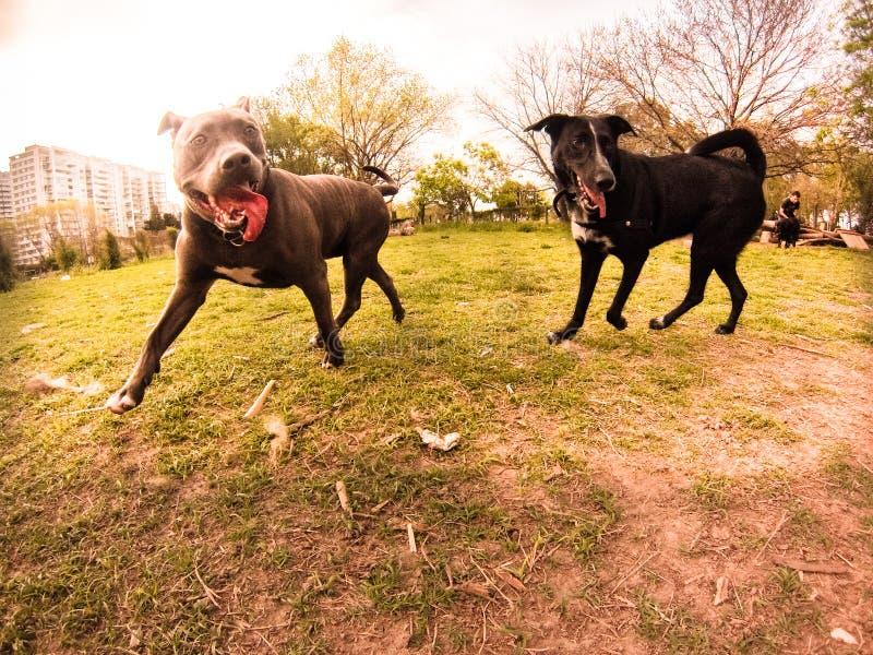 Hondpark royalty-vrije stock foto